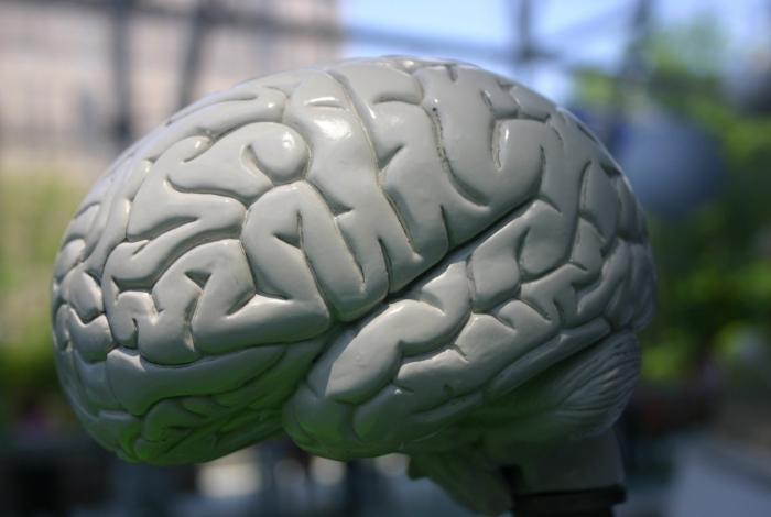 Descoberta de brasileiros pode ajudar no tratamento de doenças como Parkinson e AVC